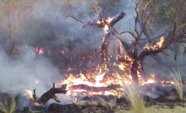 Incendio en campo en la zona de Luan Toro