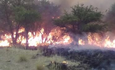 Se incendió un campo de Luan Toro