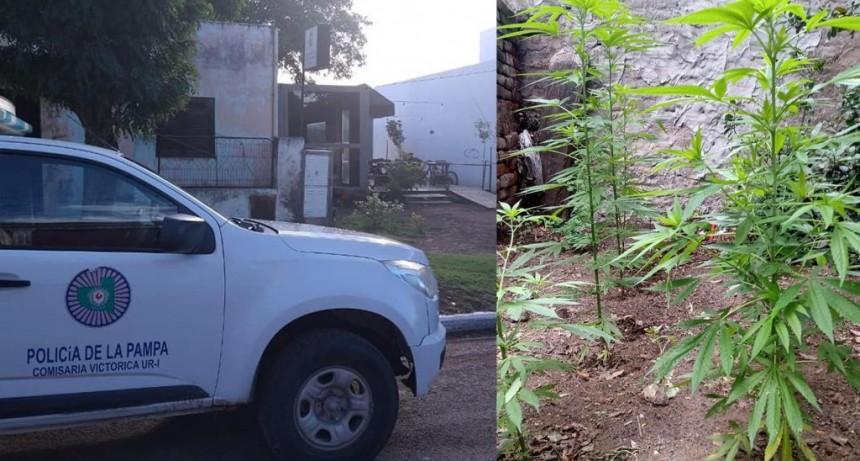 VICTORICA: ENCUENTRAN PLANTAS DE MARIHUANA, VIOLACION AL ART. 205 Y CLAUSURA DE LOCAL