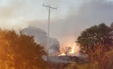 Incendio ocasionan daños en el tendido eléctrico