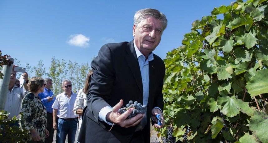 """Comenzó hoy la tradicional vendimia en Casa de Piedra: """"Las bodegas tienen vinos de mucha calidad"""" aseguró Ziliotto"""