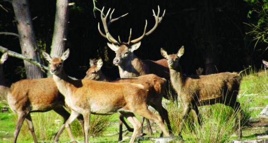 La temporada de caza en La Pampa, sin extranjeros: imponen cuarentena obligatoria