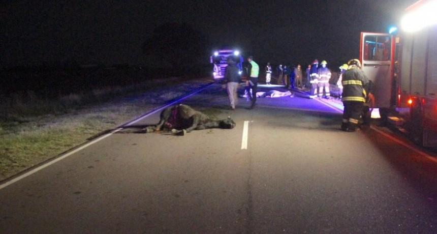 FATAL ACCIDENTE A METROS DE GENERAL PICO: Un muerto y dos personas heridas tras chocar un auto con un caballo suelto en medio de la ruta