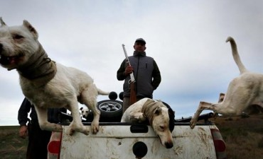 En Carmen de Patagones, autorizan cazar jabalíes porque son una plaga