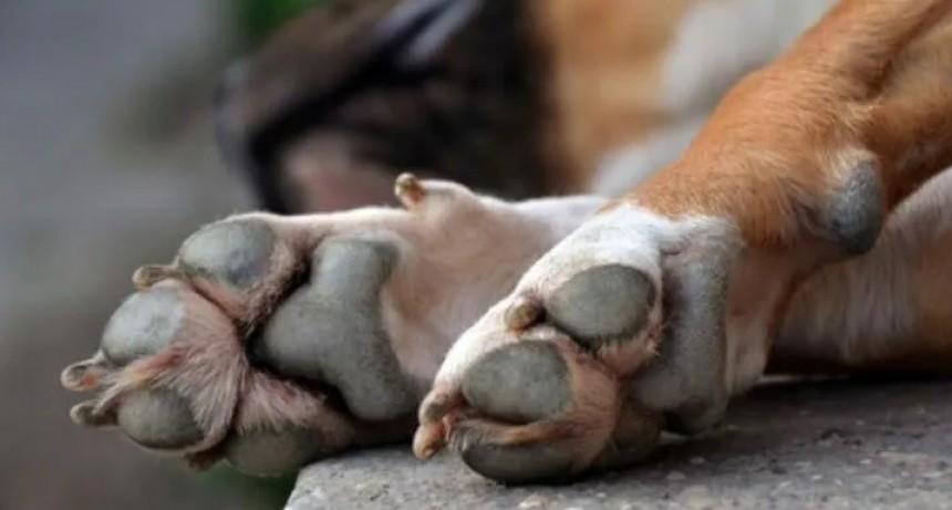 Mutilaron y mataron un perro, lo arrojaron a la vía publica
