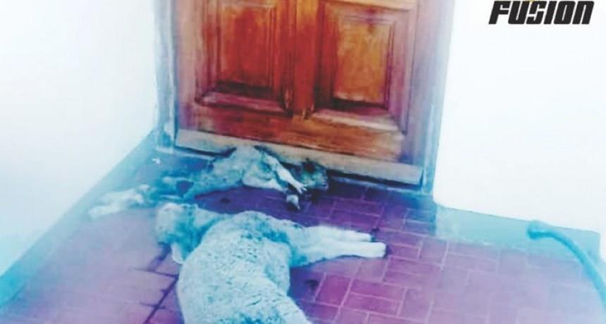 Catriló: Agredieron la casa del Intendente Delfino arrojando corderos muertos en la puerta