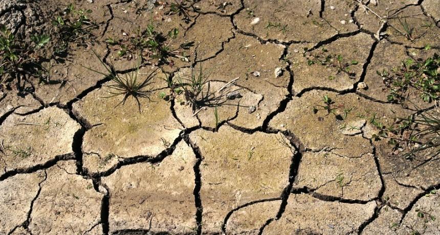 Sequía: en diez días declaran la emergencia nacional en 6 millones de hectáreas de La Pampa